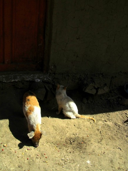 14a - pig and cat